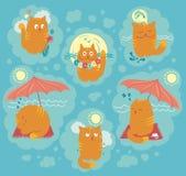 Gatos del verano stock de ilustración