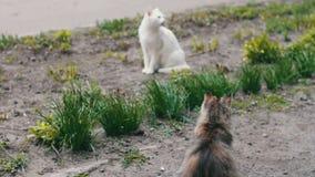 Gatos desabrigados antes na grama video estoque