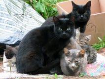 Gatos desabrigados que esperam o alimento foto de stock