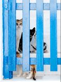 Gatos detrás de una puerta Imagen de archivo libre de regalías