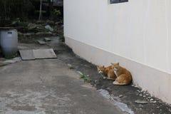 Gatos dispersos fotografia de stock