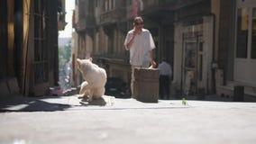 Gatos dispersos na rua de Istambul Turquia 4K vídeos de arquivo