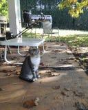 Gatos dispersos que esperam o alimento Fotografia de Stock Royalty Free