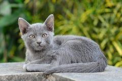 Gatos dispersos que olham a câmera Foto de Stock Royalty Free