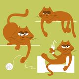 Gatos divertidos Imagenes de archivo