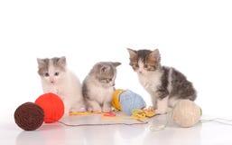 Gatos divertidos con los penachos del hilado en un fondo blanco Imagen de archivo libre de regalías