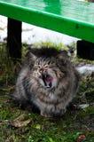 Gatos divertidos después de la lluvia Imagen de archivo