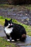 Gatos divertidos después de la lluvia En el jardín Fotografía de archivo libre de regalías