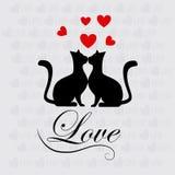 Gatos do amor Fotografia de Stock