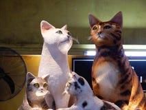 Gatos do animal de estimação Imagens de Stock