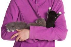 3 gatos do bebê Imagem de Stock Royalty Free