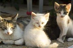 Gatos do bebê da rua com mãe Imagens de Stock Royalty Free