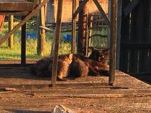 Gatos do celeiro do país fotografia de stock royalty free