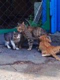 Gatos do cuidado e do cutie dos gatos da mamã imagem de stock