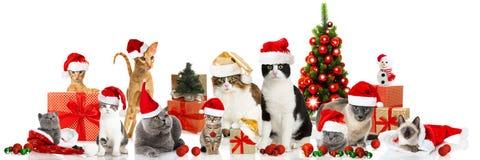 Gatos do Natal Imagem de Stock