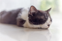 Gatos do sleepCute do gato, gatos bonitos Imagem de Stock Royalty Free