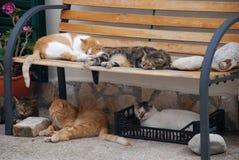 Gatos do sono Imagem de Stock Royalty Free
