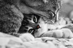 Gatos doces imagens de stock royalty free