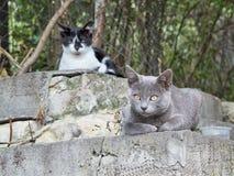 Gatos dos sem abrigo do grupo Fotografia de Stock Royalty Free