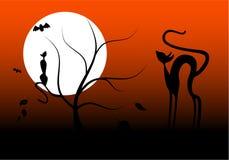 Gatos e bastões de Halloween Foto de Stock Royalty Free