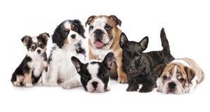 Gatos e cães Fotografia de Stock