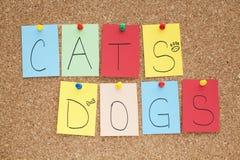 Gatos e cães Foto de Stock Royalty Free
