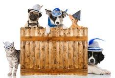 Gatos e cães Foto de Stock