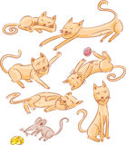 Gatos e ilustração do rato Imagem de Stock
