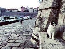 Gatos e mar Imagens de Stock