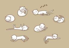 Gatos el dormir fijados Foto de archivo