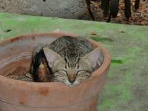 Gatos em Cuba na primavera Recurso cubano fotografia de stock