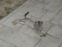 Gatos em Cuba na primavera Recurso cubano imagens de stock