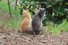 Gatos em uma rocha Imagens de Stock Royalty Free