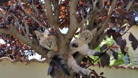 Gatos en árbol Imagen de archivo libre de regalías