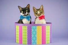2 gatos en caja colorida Imagen de archivo