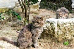 Gatos en calle en Túnez imagenes de archivo