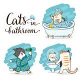 Gatos en cuarto de baño Imagenes de archivo