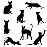 Gatos en diversas actitudes, siluetas El gato miente, sienta, estira su parte posterior, silbidos, juega, va Animal agraciado Uti stock de ilustración