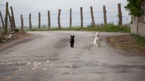 Gatos en el camino Foto de archivo