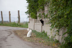 Gatos en el camino Imagen de archivo libre de regalías