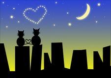 Gatos en el tejado de la ciudad de la noche Imagen de archivo