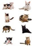 Gatos en estudio Imagen de archivo libre de regalías