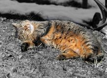 Gatos en la calle Foto de archivo libre de regalías