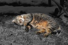 Gatos en la calle Fotografía de archivo
