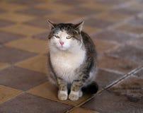 Gatos en la calle Imágenes de archivo libres de regalías