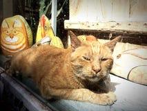 Gatos en la ciudad imagenes de archivo