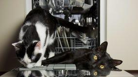 Gatos en la cocina Imágenes de archivo libres de regalías