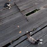 Gatos en la madera Fotografía de archivo libre de regalías