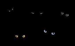 Gatos en la obscuridad Imagenes de archivo