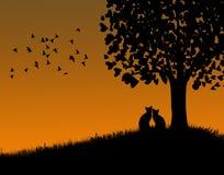 Gatos en la puesta del sol Foto de archivo libre de regalías